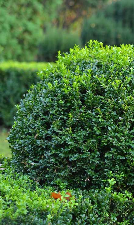 Allscapes Exteriors Ltd Shrubs & Hedges